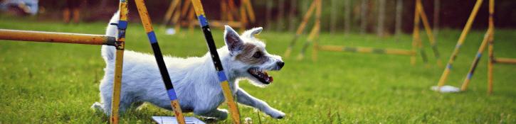 hond in hondentraining