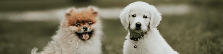 puppy's op puppycursus