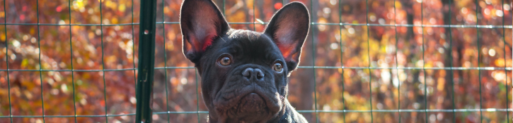 puppy in hondenren